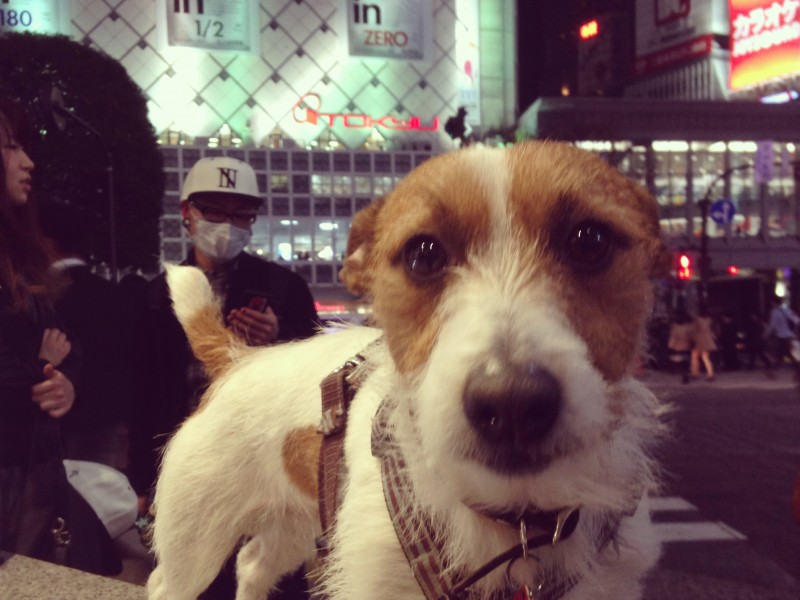 Pet-friendly BBQ & Pub Crawl in Omotesando and Shibuya